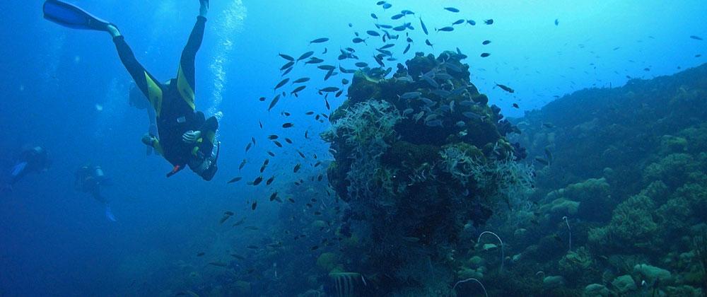 Eine unbeschreibliche Unterwasserwelt